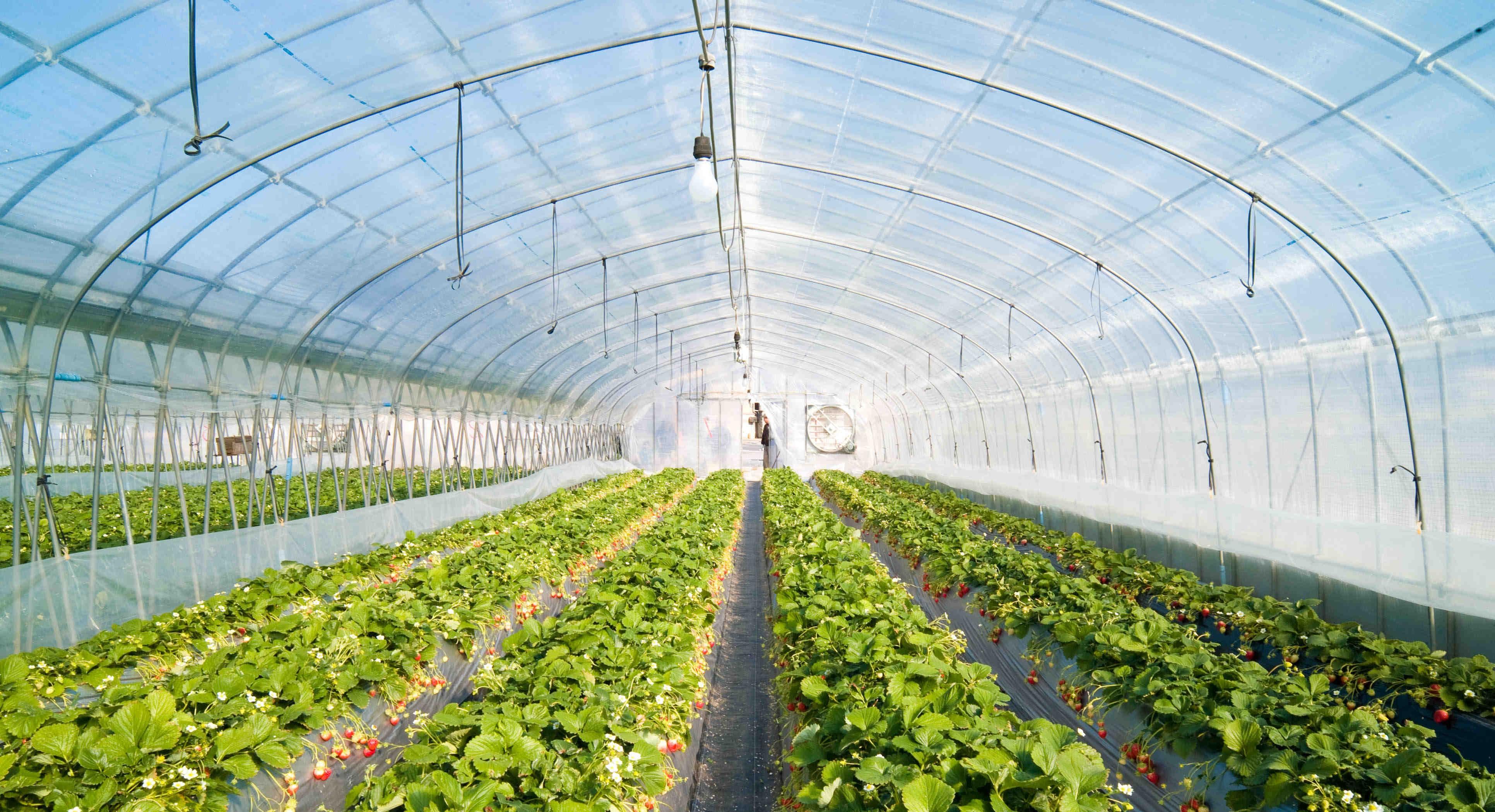 Estufas controlo ambiental gestão agrícola