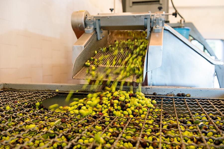 O processamento do azeite