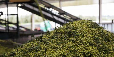 Soluções de Tecnologia para reaproveitar resíduos dos lagares de azeite