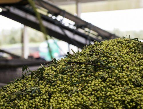 Soluções para reaproveitar resíduos dos lagares de azeite