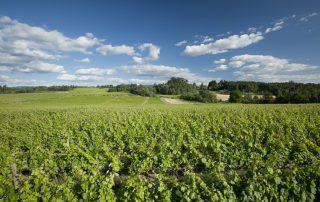 As alterações climáticas no setor vitivi