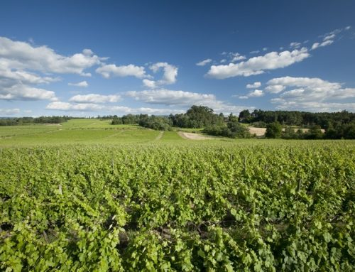 As alterações climáticas no setor vitivinícola