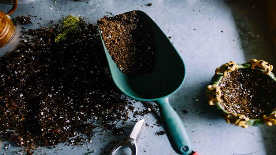 phosphorland servicos jardinagem capa