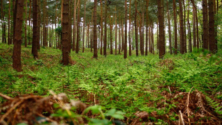 phosphorland servicos limpeza florestal capa