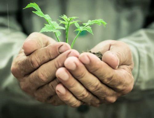 Sustentabilidade será o futuro da Agricultura