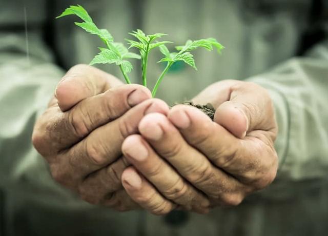 Sustentabilidade será o futuro da Agricultura Phosphorland Phorland